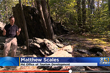Matt Scales joins WJZ-TV to celebrate Fall in Maryland