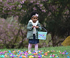 Little girl hunting for Easter eggs.