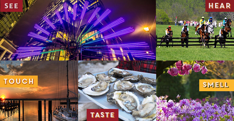 This is a collage of images. Top left image is a purple light display for Light City, top right image is a Steeplechase, bottom left image is a sunset on the water with a sailboat, middle image is a platter of oysters on the shell amd the bottom right is a picture of flowers