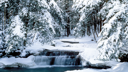 Winter snow in the woods with water falls