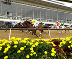 Preakness horse race at Pimlico